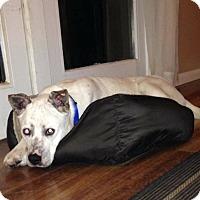Adopt A Pet :: Romeo - Laingsburg, MI