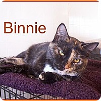 Adopt A Pet :: Binnie - Lacon, IL