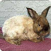 Adopt A Pet :: Sonnet - Phoenix, AZ