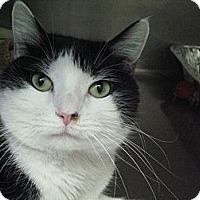 Adopt A Pet :: Bijou - Chicago, IL