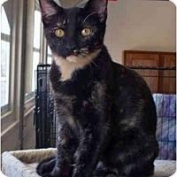 Adopt A Pet :: Rosalie - Palmdale, CA