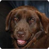 Adopt A Pet :: Hershey - Richmond, VA