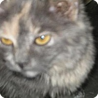 Adopt A Pet :: Anastasia - Hilham, TN
