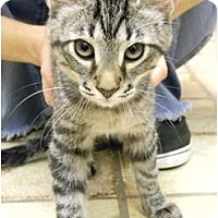 Adopt A Pet :: Tony - Bonita Springs, FL