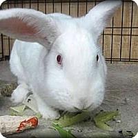 Adopt A Pet :: Lita - Williston, FL