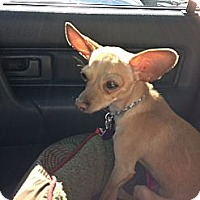 Adopt A Pet :: Radar - Commerce City, CO