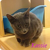 Adopt A Pet :: Kassie - Foothill Ranch, CA