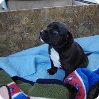 Adopt A Pet :: Bertha - Denver, CO