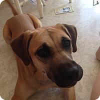 Adopt A Pet :: Naala - Courtesy Listing - Cedar Rapids, IA