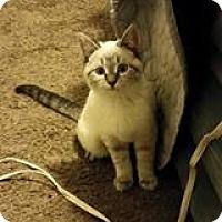 Adopt A Pet :: Elsa - Fairborn, OH