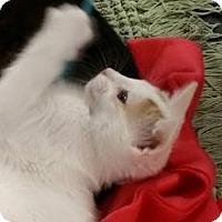 Adopt A Pet :: Tutterbug - McDonough, GA