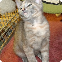 Adopt A Pet :: LUCINIA - Acme, PA