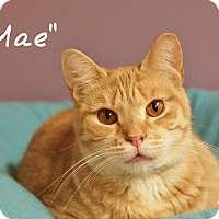 Adopt A Pet :: Mae - Ocean City, NJ