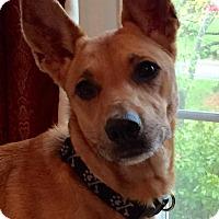 Adopt A Pet :: Fern - Cranston, RI