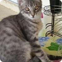 Adopt A Pet :: Grayson - Melbourne, FL
