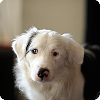 Adopt A Pet :: Cookie - San Francisco, CA