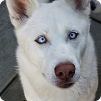 Adopt A Pet :: Raquel - Apple valley, CA