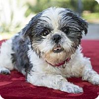 Adopt A Pet :: Yasmin - Alvin, TX