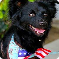 Adopt A Pet :: Bubba - South El Monte, CA