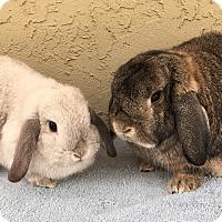 Adopt A Pet :: Bubbles & Emma - Bonita, CA