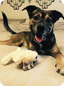 German Shepherd Dog Mix Dog for adoption in Forreston, Texas - Oakley