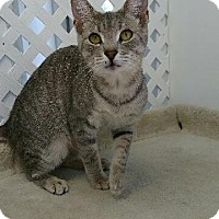 Adopt A Pet :: Biscuit - Austintown, OH
