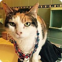 Adopt A Pet :: Marcy - Cheltenham, PA
