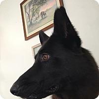 Adopt A Pet :: Astrid - Manhattan, KS