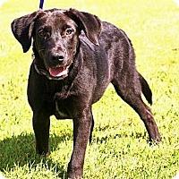 Adopt A Pet :: Jack Daniels~ meet me! - Glastonbury, CT