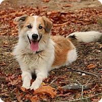 Adopt A Pet :: POLARIS - Pegram, TN
