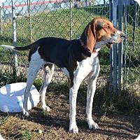 Adopt A Pet :: Cali - Prole, IA
