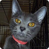 Adopt A Pet :: Delany - Hamburg, NY