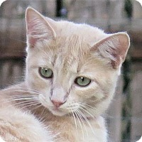 Adopt A Pet :: Sprite - Gonzales, TX