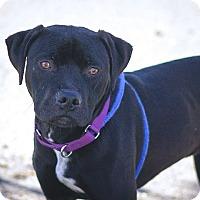 Adopt A Pet :: Wendell - Berkeley, CA