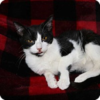 Adopt A Pet :: Beauty - Mackinaw, IL