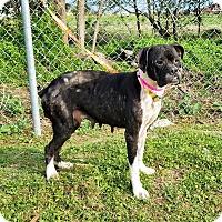 Adopt A Pet :: Emmy - Austin, TX