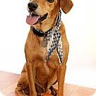 Adopt A Pet :: Timber