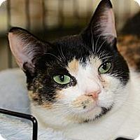 Adopt A Pet :: Geisha - Harrisburg, NC