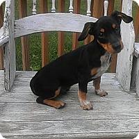 Adopt A Pet :: Sherlock - Austin, AR