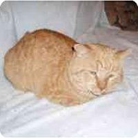 Adopt A Pet :: Garfield - Hamburg, NY