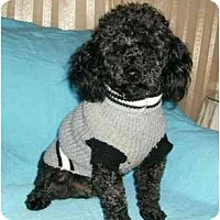 Adopt A Pet :: Theodore - Mooy, AL