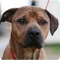 Adopt A Pet :: Max - kennebunkport, ME
