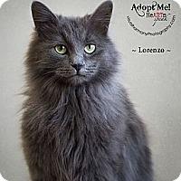 Adopt A Pet :: Lorenzo - Phoenix, AZ