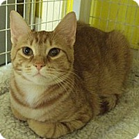 Adopt A Pet :: Cougar - Memphis, TN