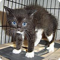 Adopt A Pet :: Maggie - Mundelein, IL