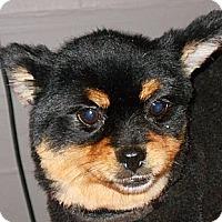 Adopt A Pet :: Lilly - Plain City, OH