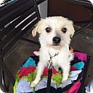 Adopt A Pet :: Dori