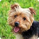 Adopt A Pet :: DARBY DOO