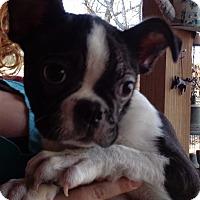 Adopt A Pet :: Spud - Crump, TN