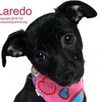Adopt A Pet :: Laredo - Simi Valley, CA